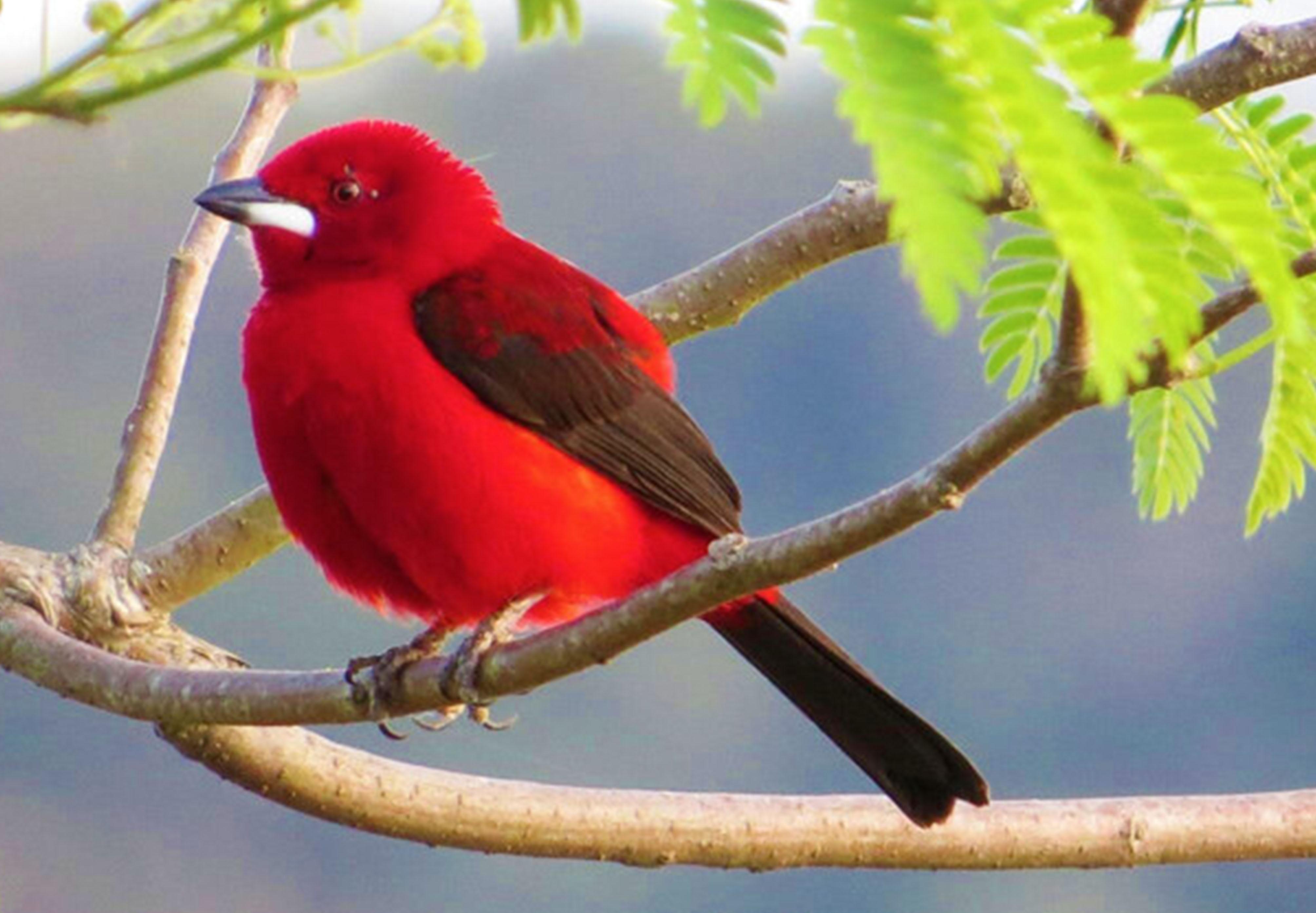 aves3